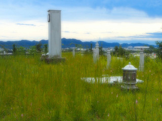 草原にバルブニョキニョキ