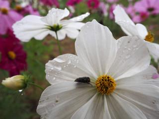 花の中にいるのは何者?