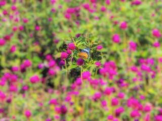 ピンクの花の群れ