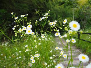 ふつうに可愛い花