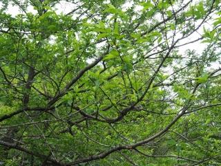 複雑に絡み合う枝