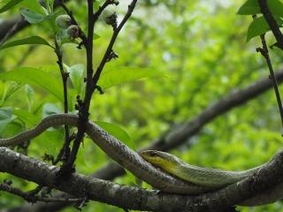 枝の上の蛇
