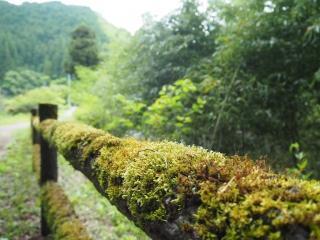 遊歩道の柵に苔がびっしり